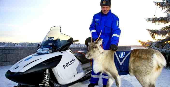 Тундра и Арктика территория вездеходов. Северные Олени - Карибу - Rangifer Tarandus. Северный Олень на службе в полиции Финляндии